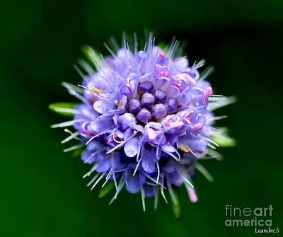 Photograph - Purple Flower by Sylvie Leandre