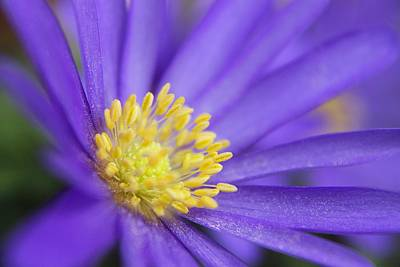 Photograph - Purple Flower Yellow Pollen by Scott Hovind