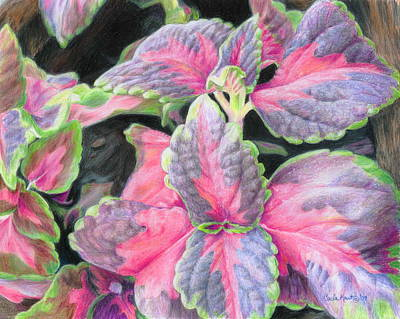 Drawing - Purple Flowering Plant by Carla Kurt