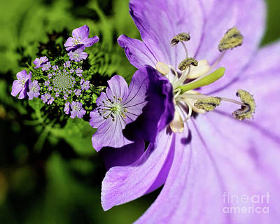Photograph - Purple Flowers Abstract by Smilin Eyes  Treasures