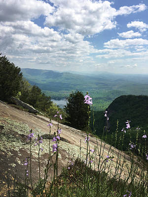 Photograph - Purple Flowers At Table Rock Overlook by Kelly Hazel