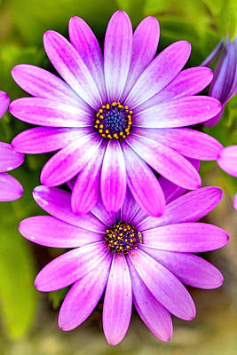 Calendar Photograph - Purple Flowers by Az Jackson