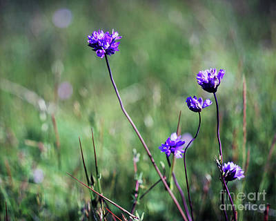 Art Print featuring the photograph Purple Flowers by Jim and Emily Bush