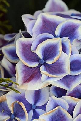 Photograph - Purple Flowers by Fred Bonilla
