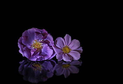 Studio Photograph - Purple Flowers by Jan Boesen