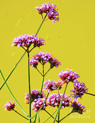 Photograph - Purple Flowers On Yellow by Randall Weidner