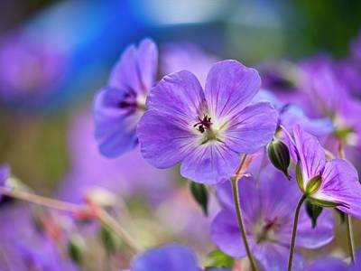 Purple Flowers Print by Rae Tucker