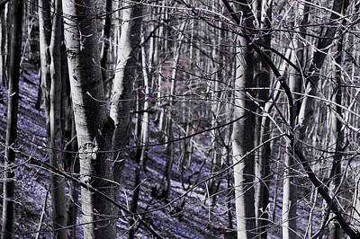 Photograph - Purple Forest by Milena Ilieva