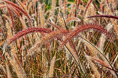 Photograph - Purple Fountain Grass Abstract 2 By H H Photography Of Florida  by HH Photography of Florida