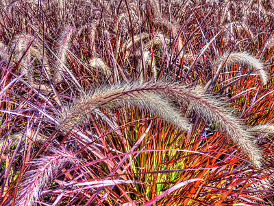 Photograph - Purple Fountain Grass by Leslie Montgomery