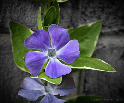 Photograph - Purple Garden Flowers by Henri Irizarri