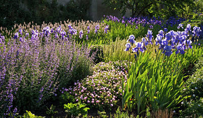 Photograph - Purple Garden by Inge Riis McDonald