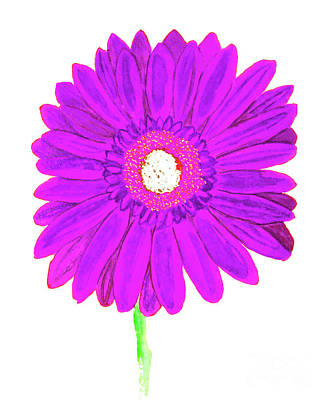Painting - Purple  Gerbera On White, Watercolor by Irina Afonskaya