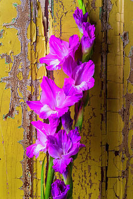 Gladiolus Photograph - Purple Glad by Garry Gay