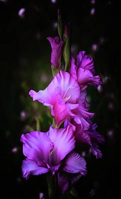 Photograph - Purple Gladiolas by Athena Mckinzie