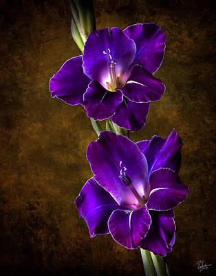 Photograph - Purple Gladiolas by Endre Balogh