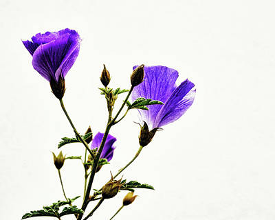 Photograph - Purple Glory by Camille Lopez