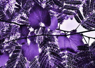 Purple Grapes Digital Art - Purple Grape Mimosa by Wendy Rickwalt