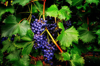 Grapes Art Print by Greg Mimbs