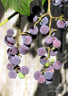 Photograph - Purple Grapes  by Janice Drew