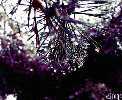 Photograph - Purple Haze 2 by September  Stone