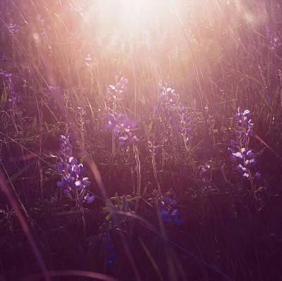 Photograph - Purple Haze by Angela King-Jones