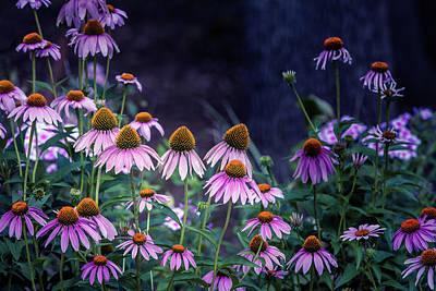 Photograph - Purple Haze by Annette Hugen