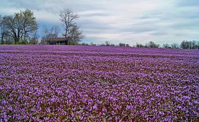 Photograph - Purple Haze by Cricket Hackmann