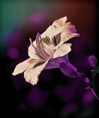 Photograph - Purple Haze by Maria Coulson