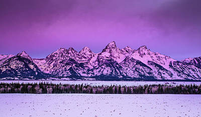 Photograph - Purple Haze by Michael Balen