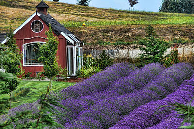 Photograph - Purple Haze by John Bushnell