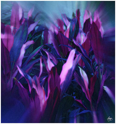 Photograph - Purple Haze by Wayne King