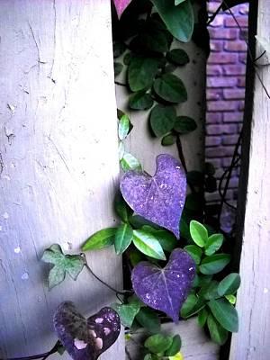Photograph - Purple Hearts by Deborah jordan Sackett
