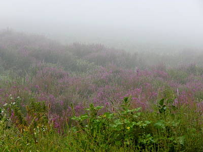 Photograph - Purple Heather by Wild Thing