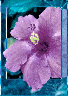 Angels And Cherubs - Purple Hibiscus In Rain by Ed McGuire