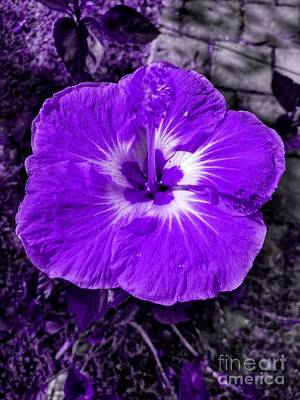 Digital Art - Purple Hibiscus by Rachel Hannah