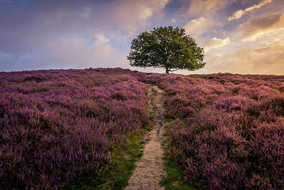 Purple Hill Art Print
