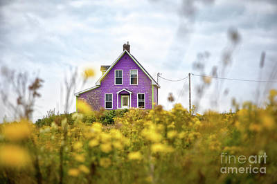 Photograph - Purple House And Yellow Flowers by Jane Rix
