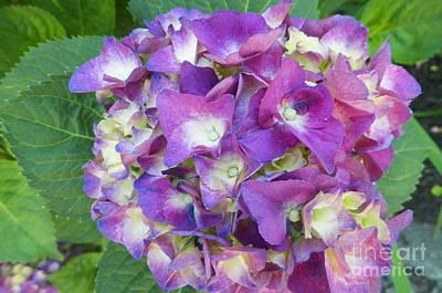Winter Animals - Purple Hydrangea by Gina Sullivan