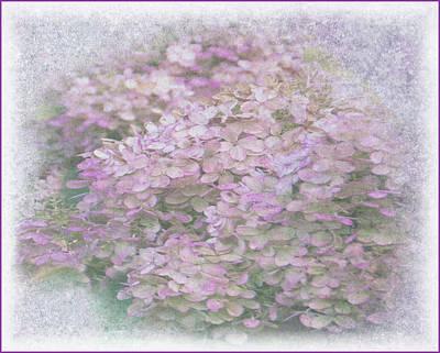 Photograph - Purple Hydrangeas by Geraldine Alexander