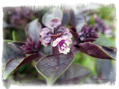 Art Print featuring the photograph Purple In Autumn by Joan  Minchak