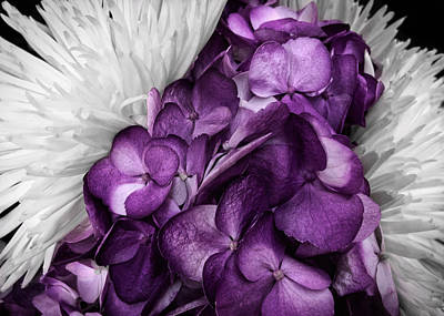 Photograph - Purple In The White by Nathan Little