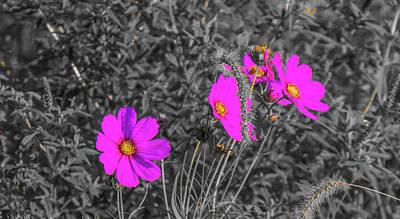 Parkersburg Wv Photograph - Purple Invasion by Jonny D