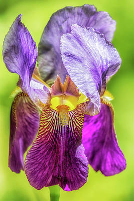 Photograph - Purple Iris 2018 by Belinda Greb