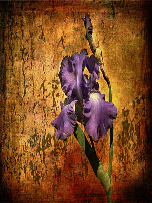 Closeup Mixed Media - Purple Iris At Sunset by Bellesouth Studio