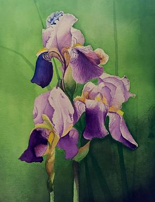 David Hoque Drawing - Purple Iris' by David Hoque