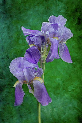 Photograph - Purple Iris Flower by Patti Deters