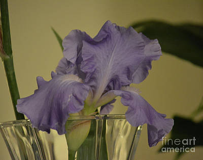 Photograph - Purple Iris In A Vase  by Ruth Housley