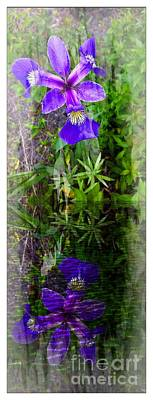 Photograph - Purple Iris Reflections by Barbara Griffin
