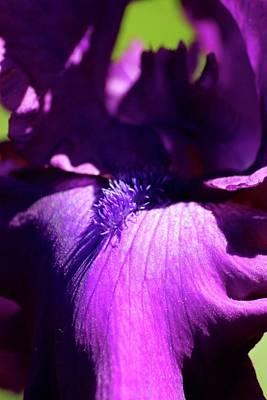 Photograph - Purple Iris by Tiffany Erdman
